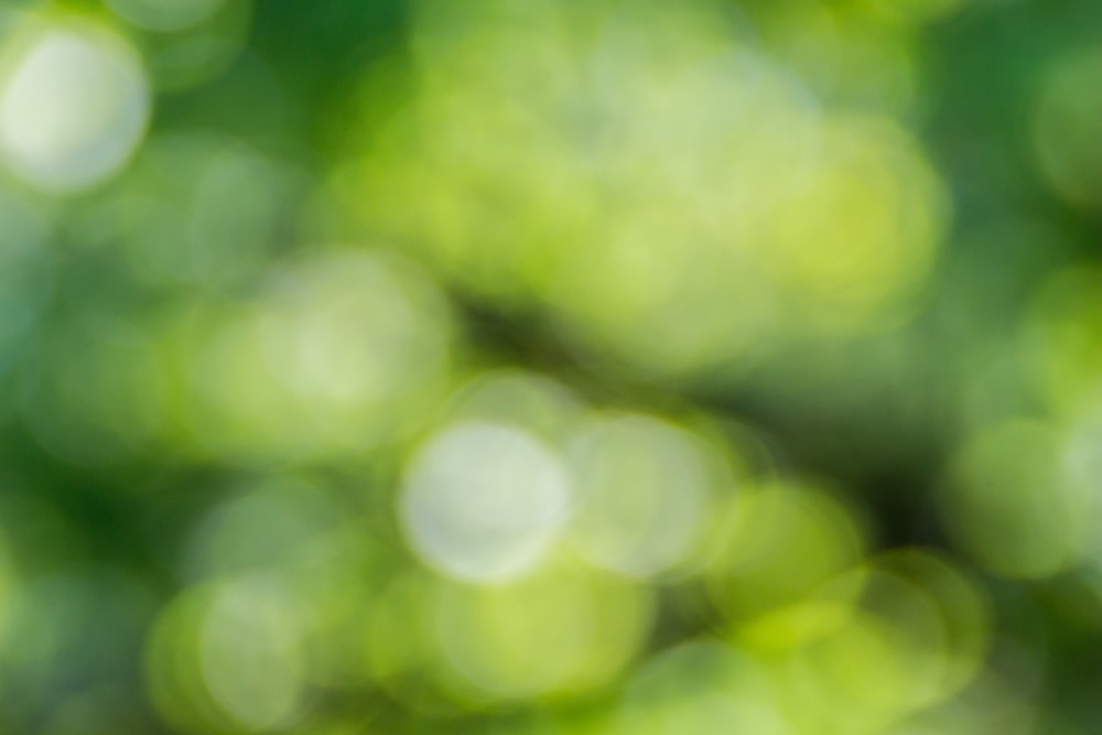 green and yellow light bokeh