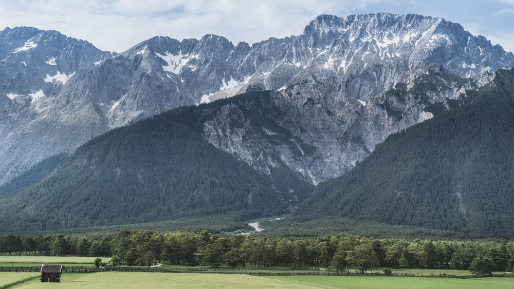 photo of tree covered mountain
