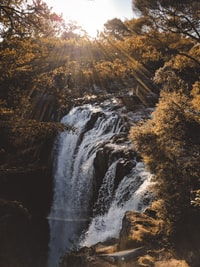 waterfalls surrounded by brown leaf trees during daytime