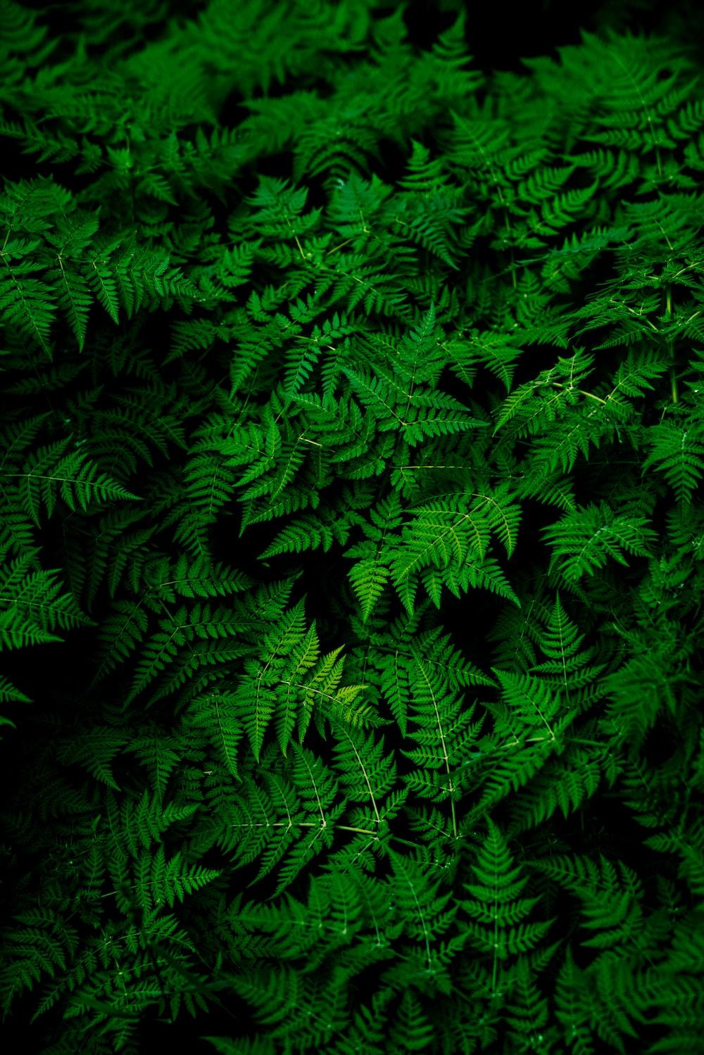 photo of green fern plant