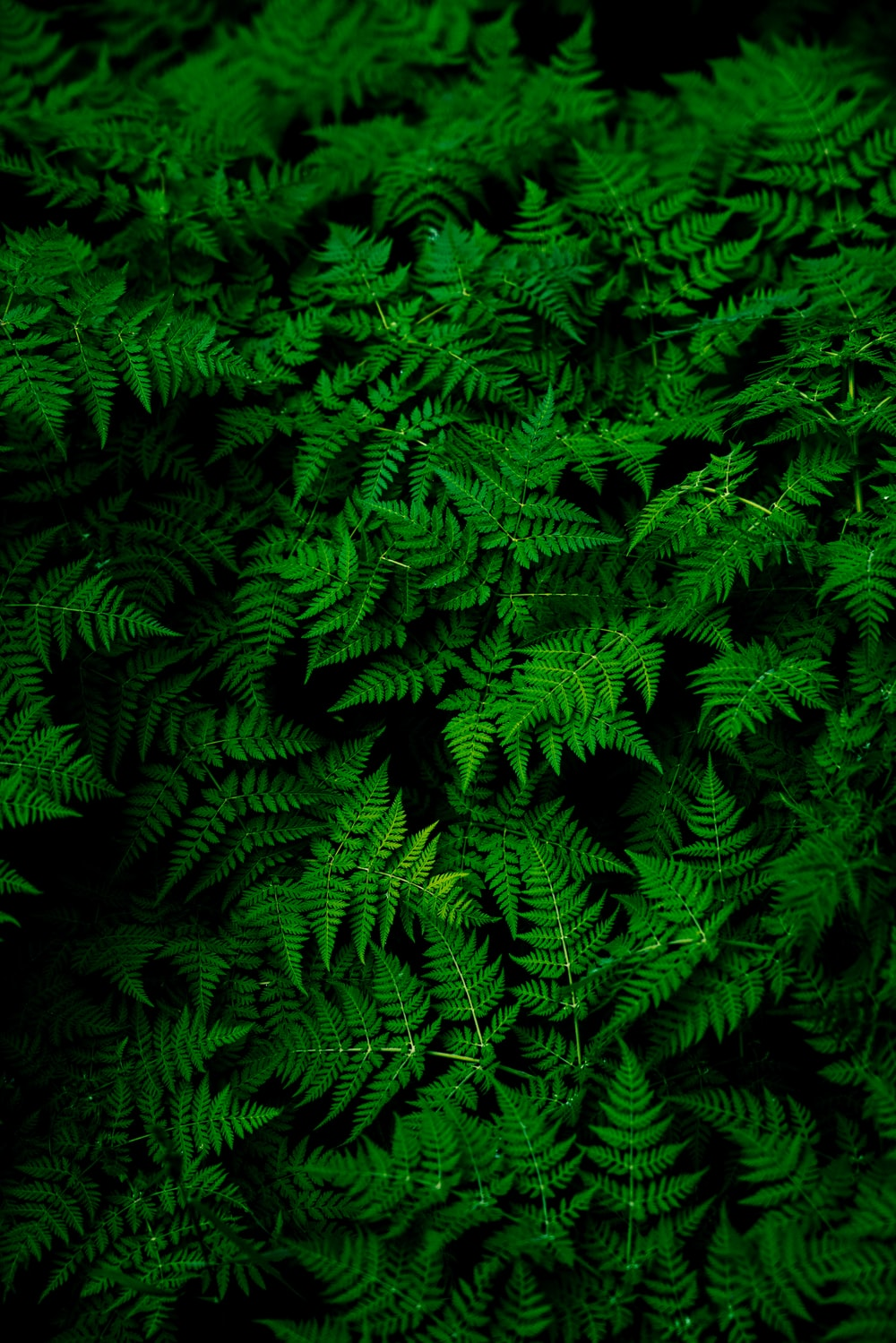 photo of green fern plant