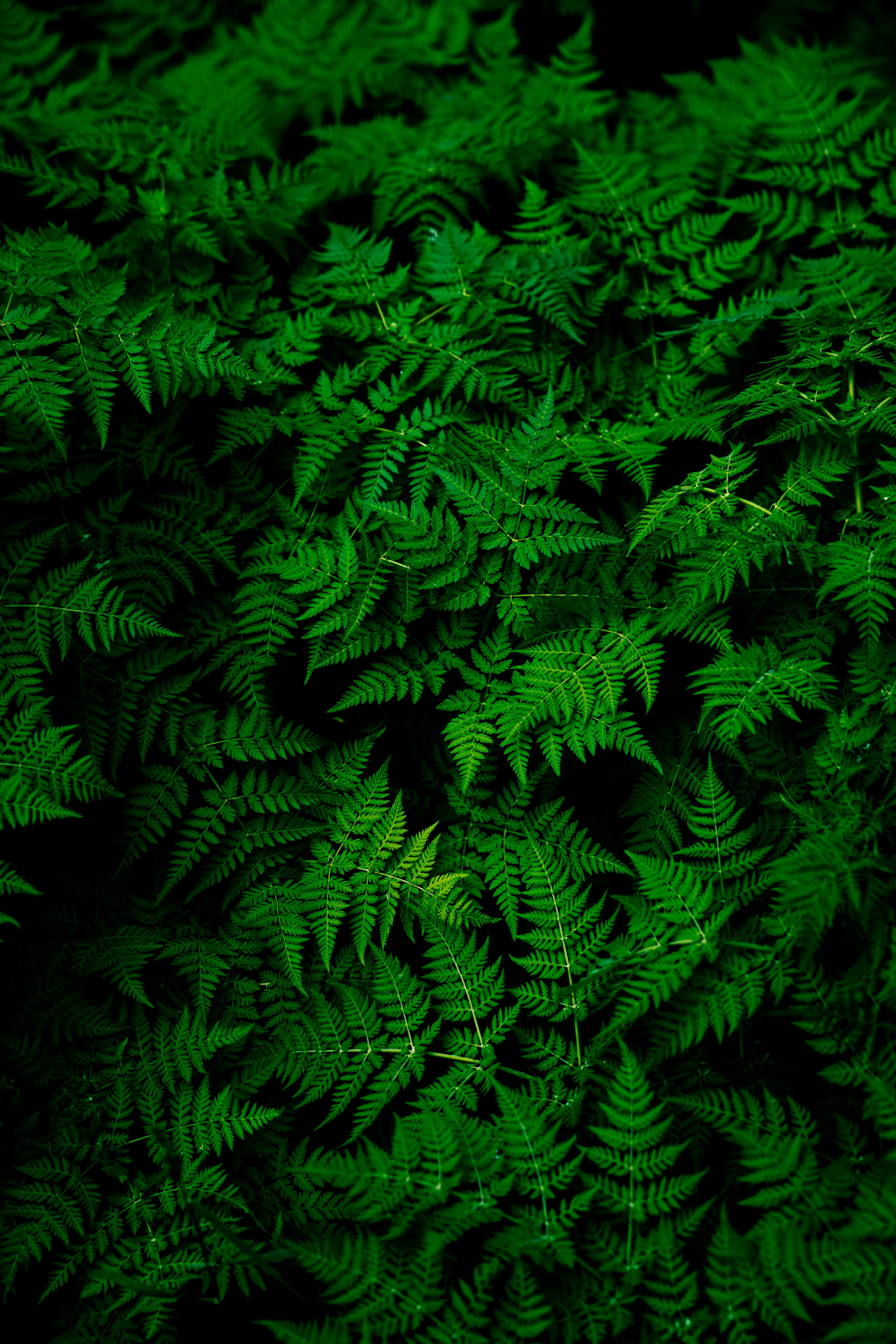 Green Pictures Hd Download Free Images On Unsplash