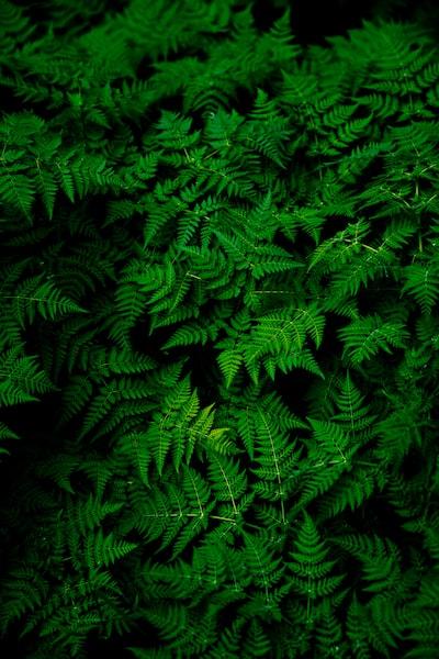 Infinite Ferns