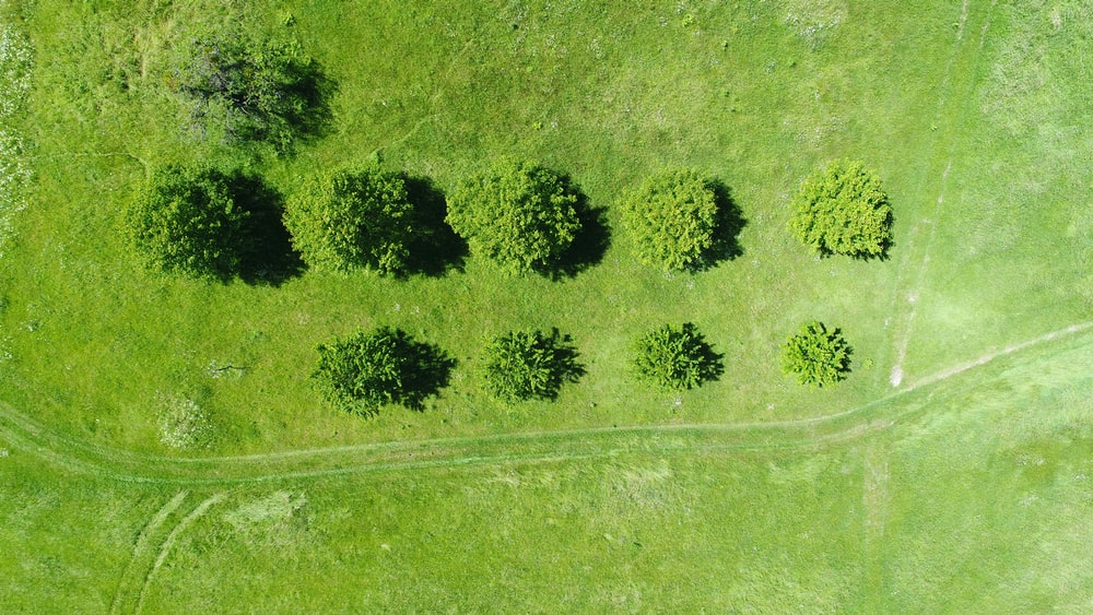 aerial photography of gree meadows