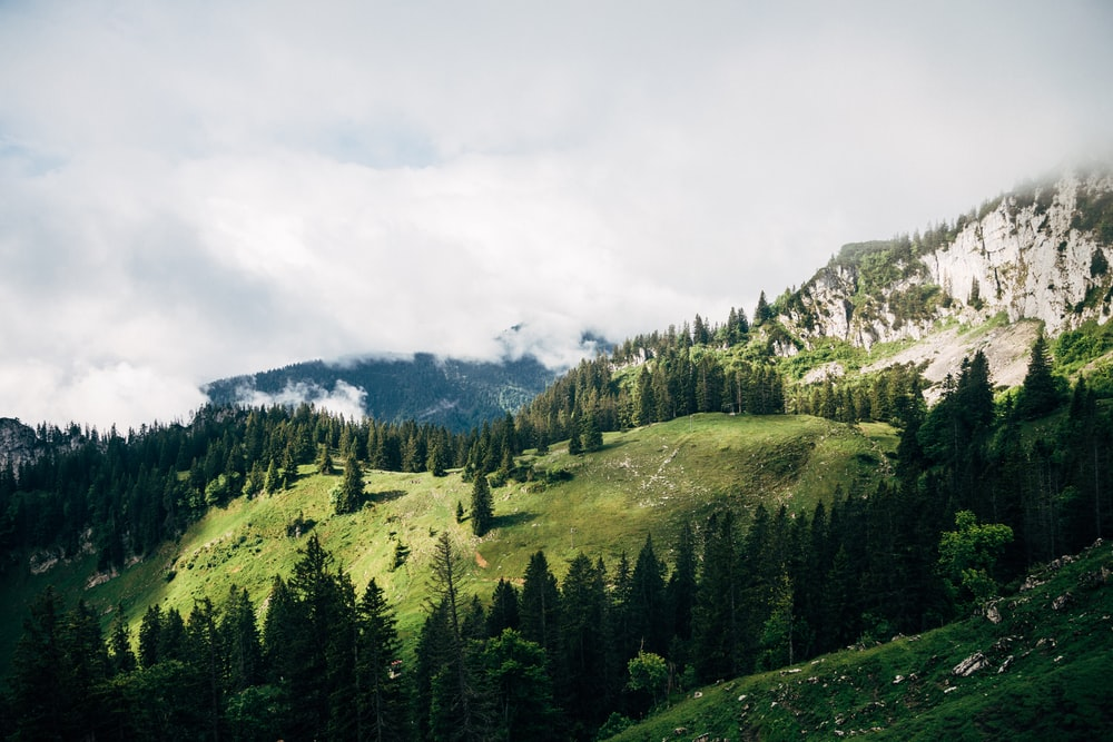 grass and tree covered mountain under white clouds
