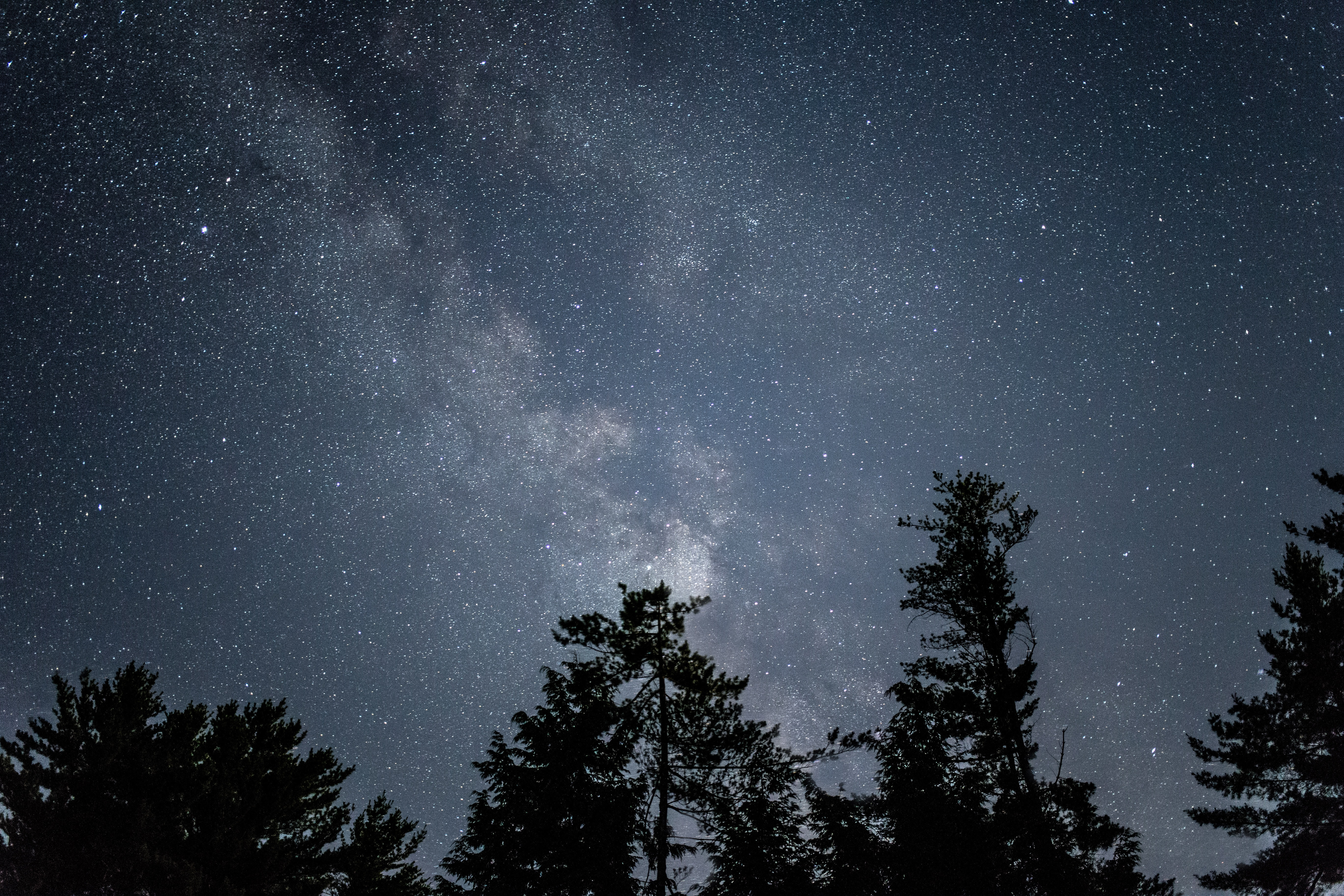 Tall trees silhouetted against a star studded night and the Milky Way