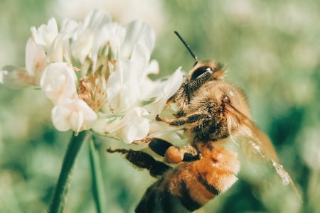 Using Flowers to Attract Bees to Pollinate Your Vegetable Garden