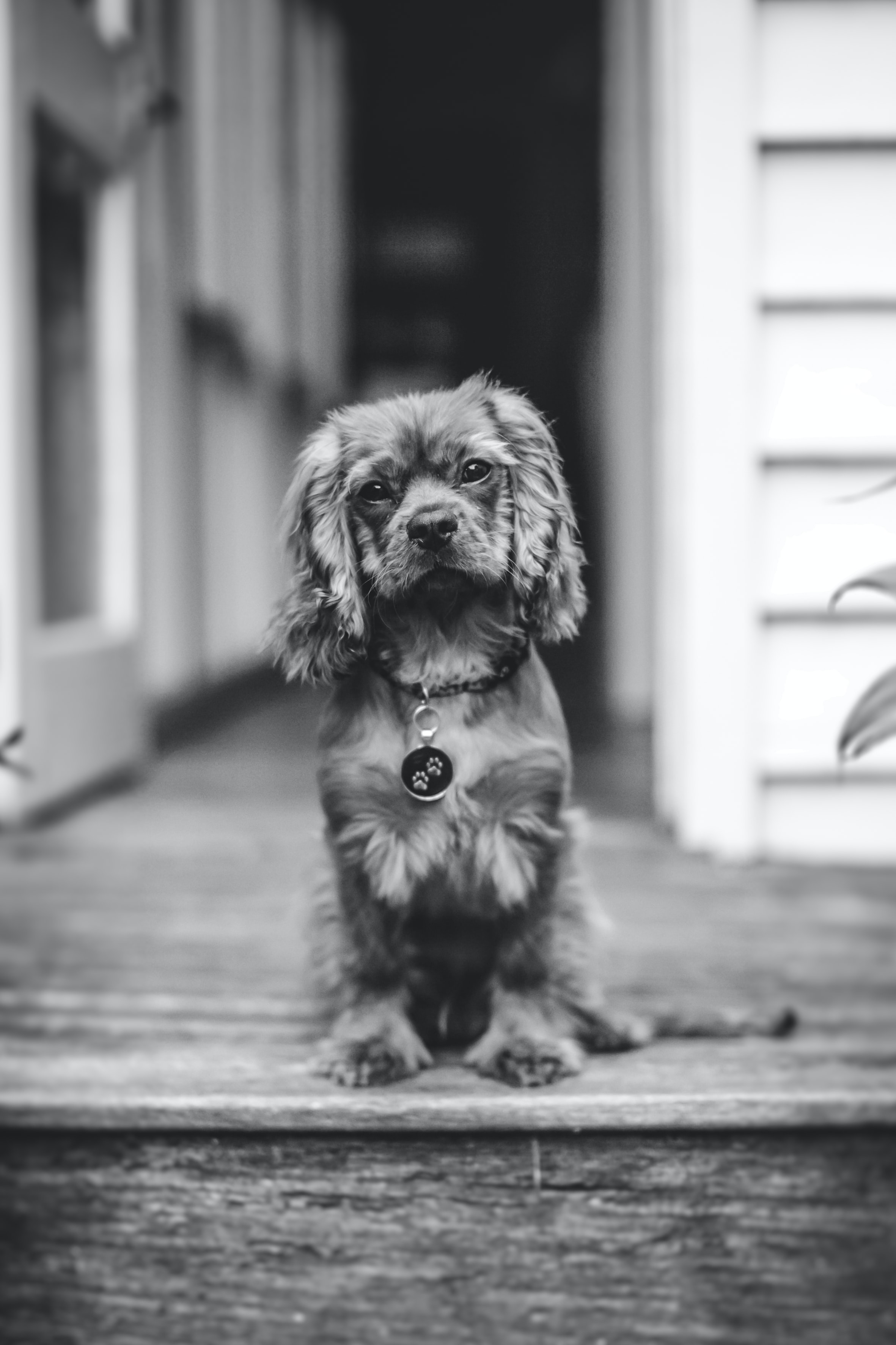 grayscale photo of dog sitting in front of door