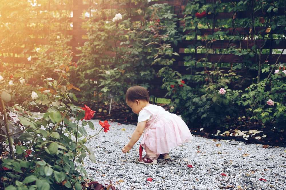 Cute baby picks up rose petals along a stone garden path