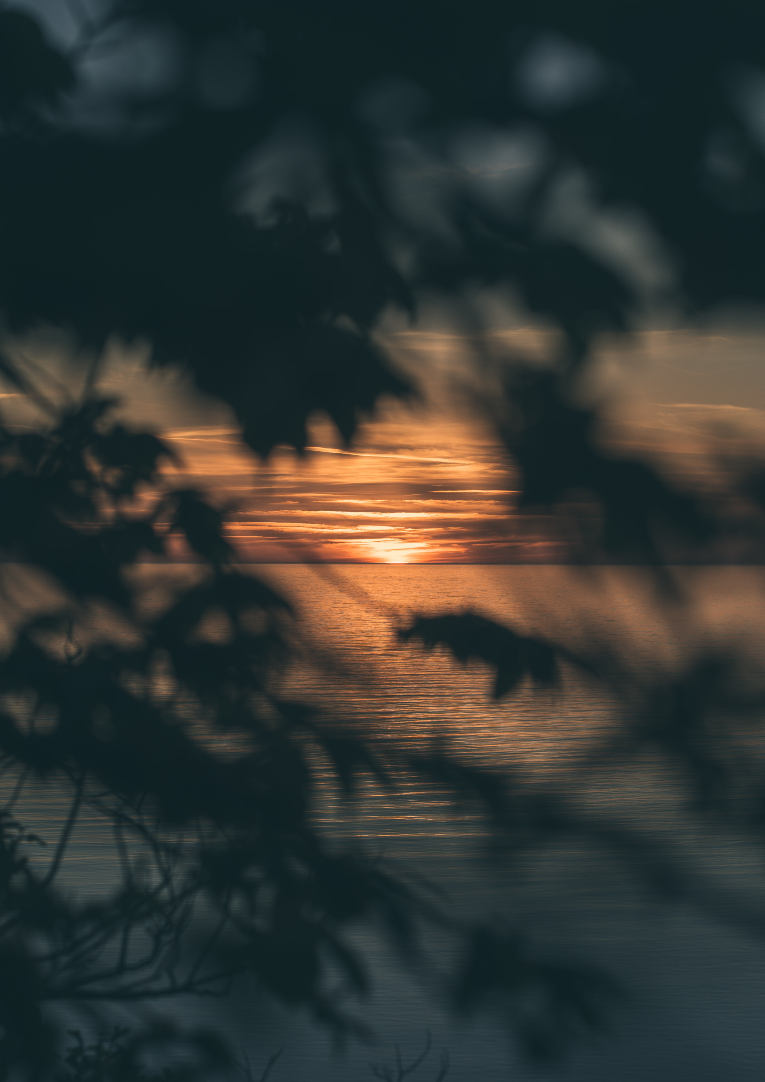 silhouette photography of tree during sunset