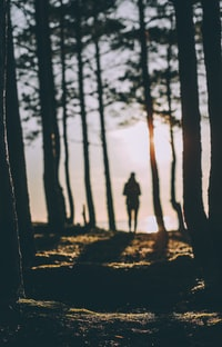 silhouette of person standing near body of water during daytime