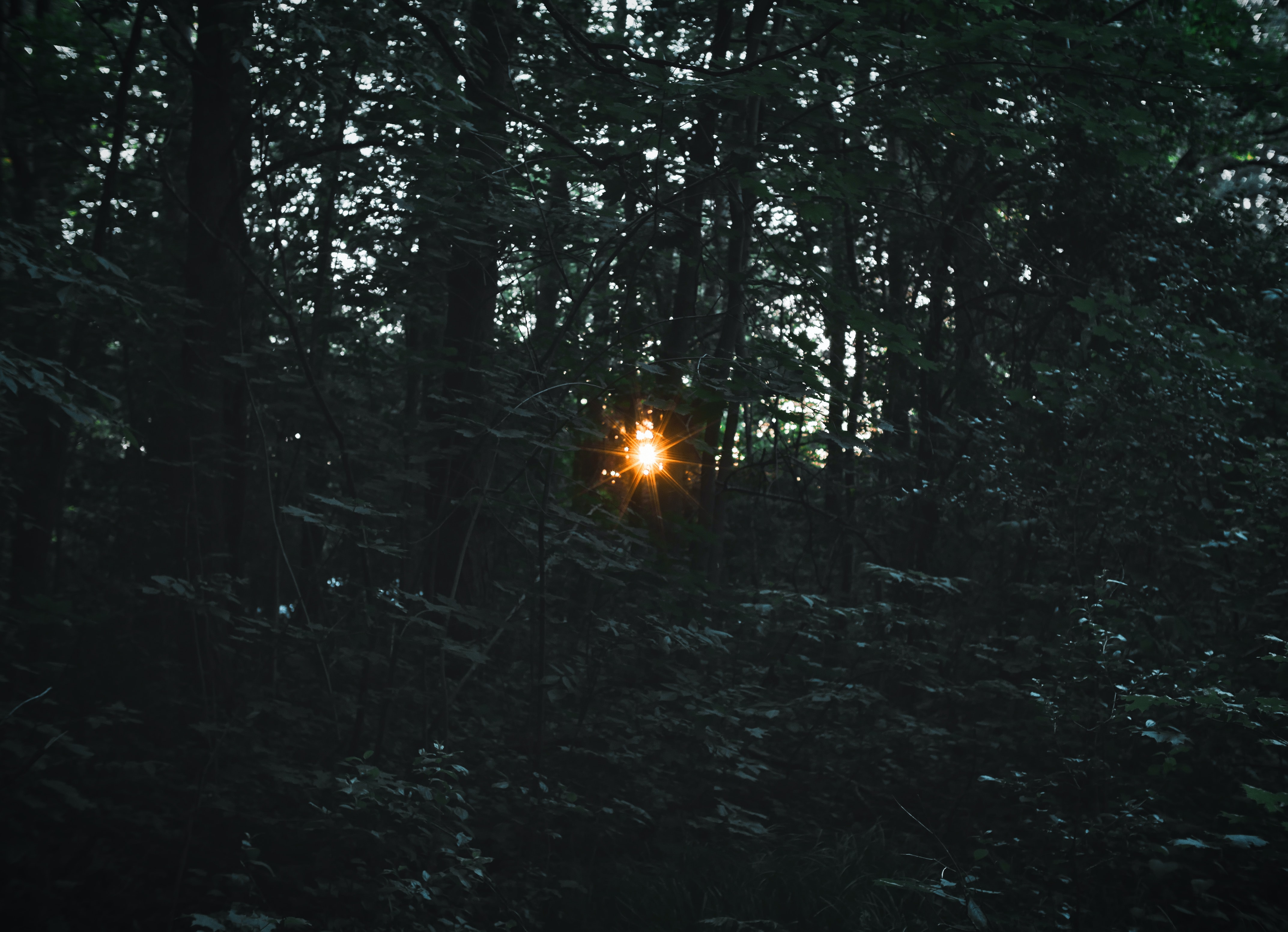 Setting sun shining through a dense forest thicket in Aurora