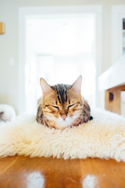 grey tabby cat on beige fur surface