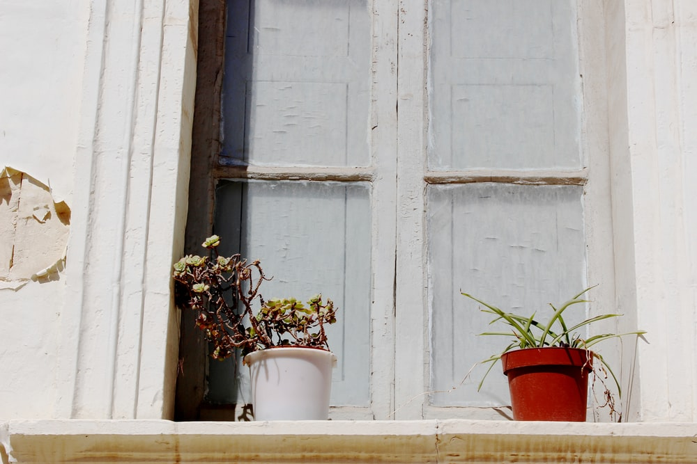 two potted plants beside closed window