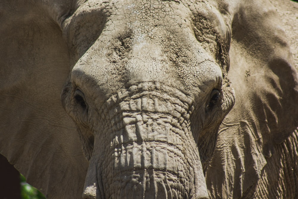 close-up photo of elephant