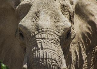 close-up photo of elephant