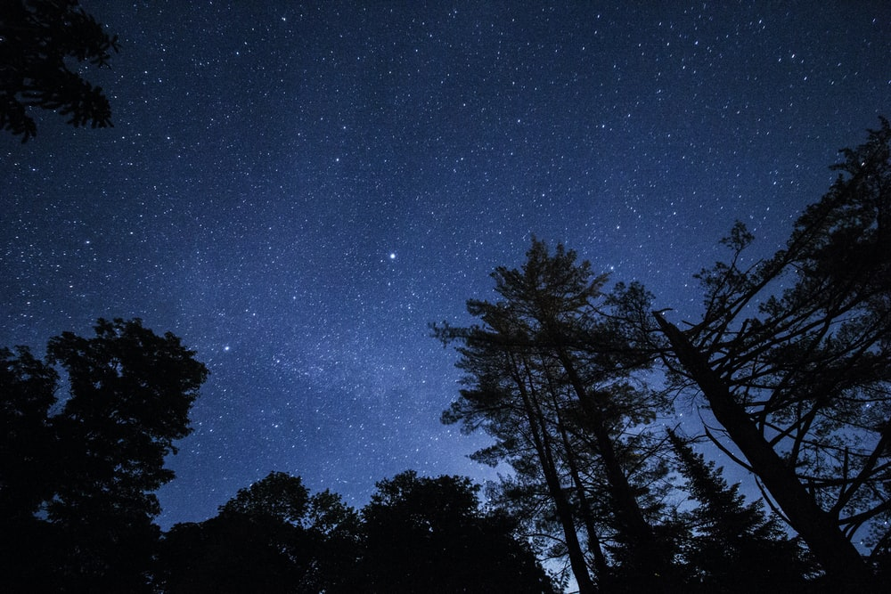 photo of trees and sky during night time