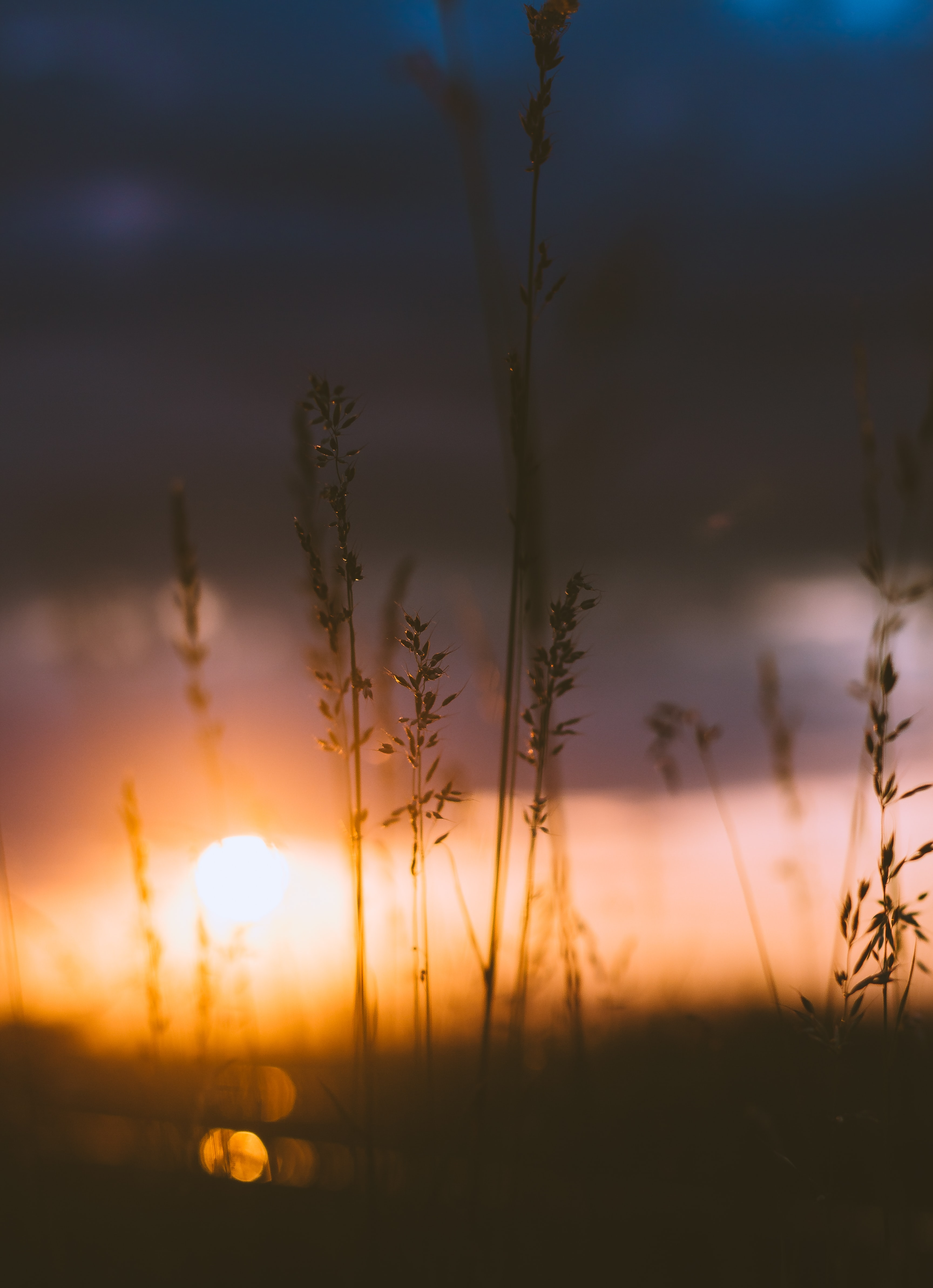 Setting sun behind blades of grass