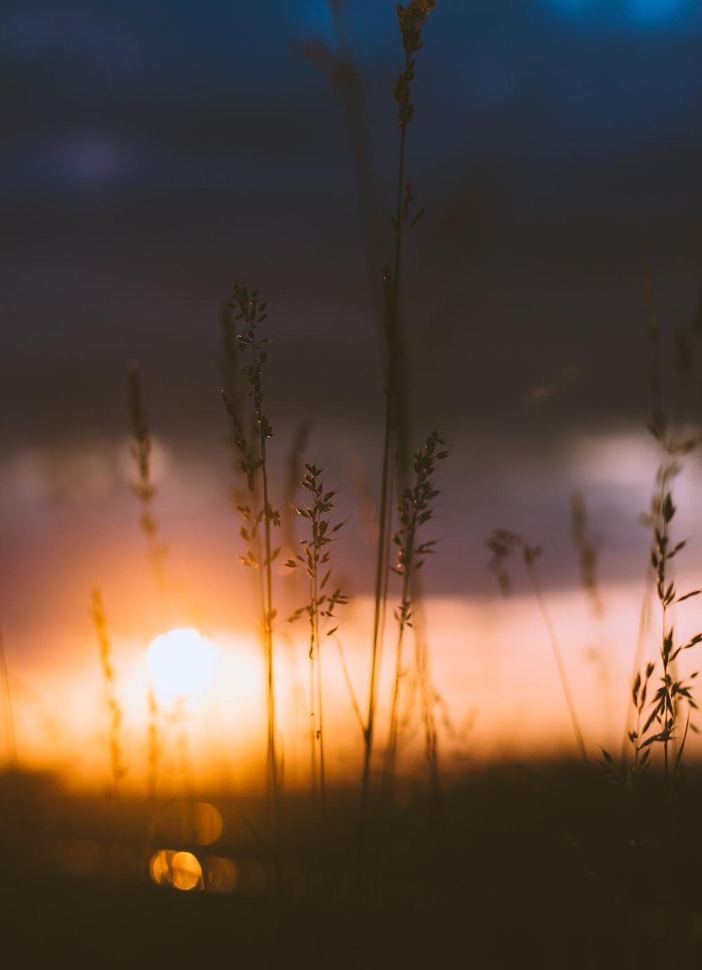 Setting Sun Behind Blades Of Grass