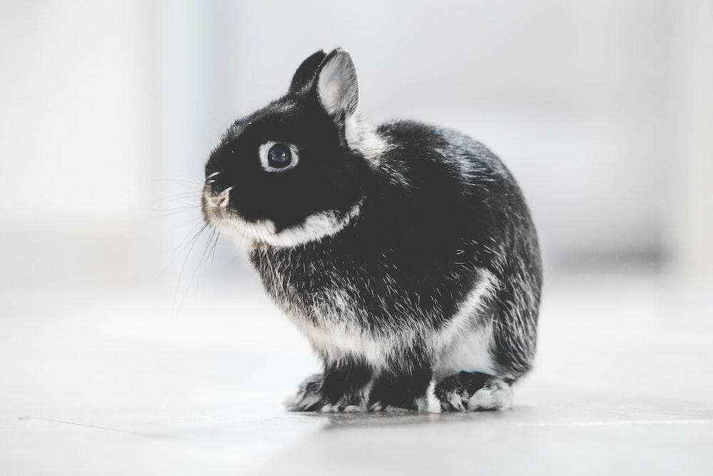 photo of black and white rabbit