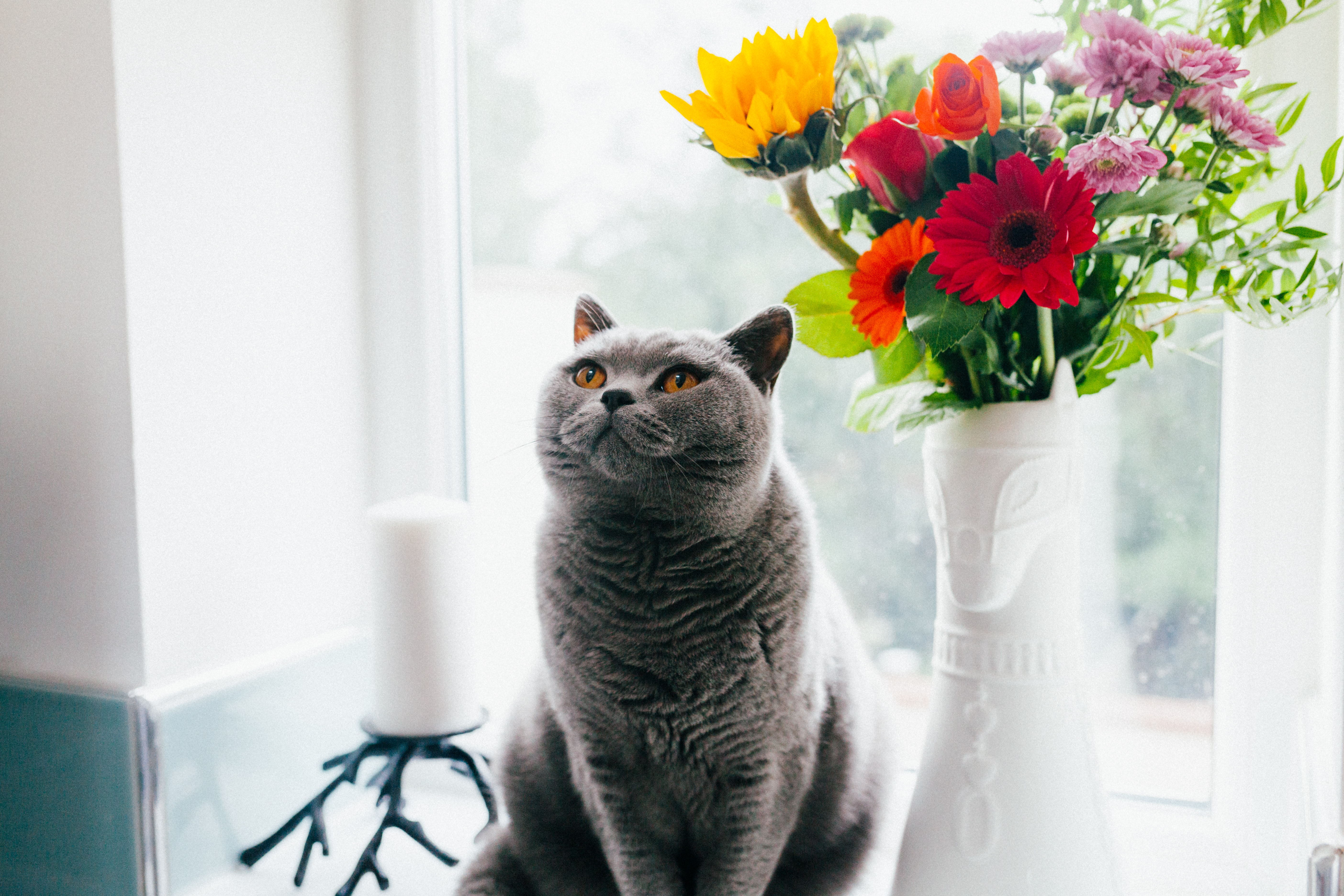 A cat sitting on a windowsill next to a vase with colorful flowers and looking up