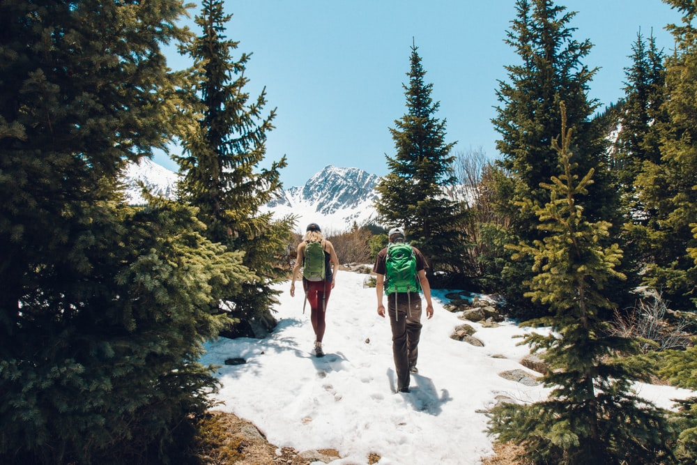 two men walking on mountain surrounded by pine trees