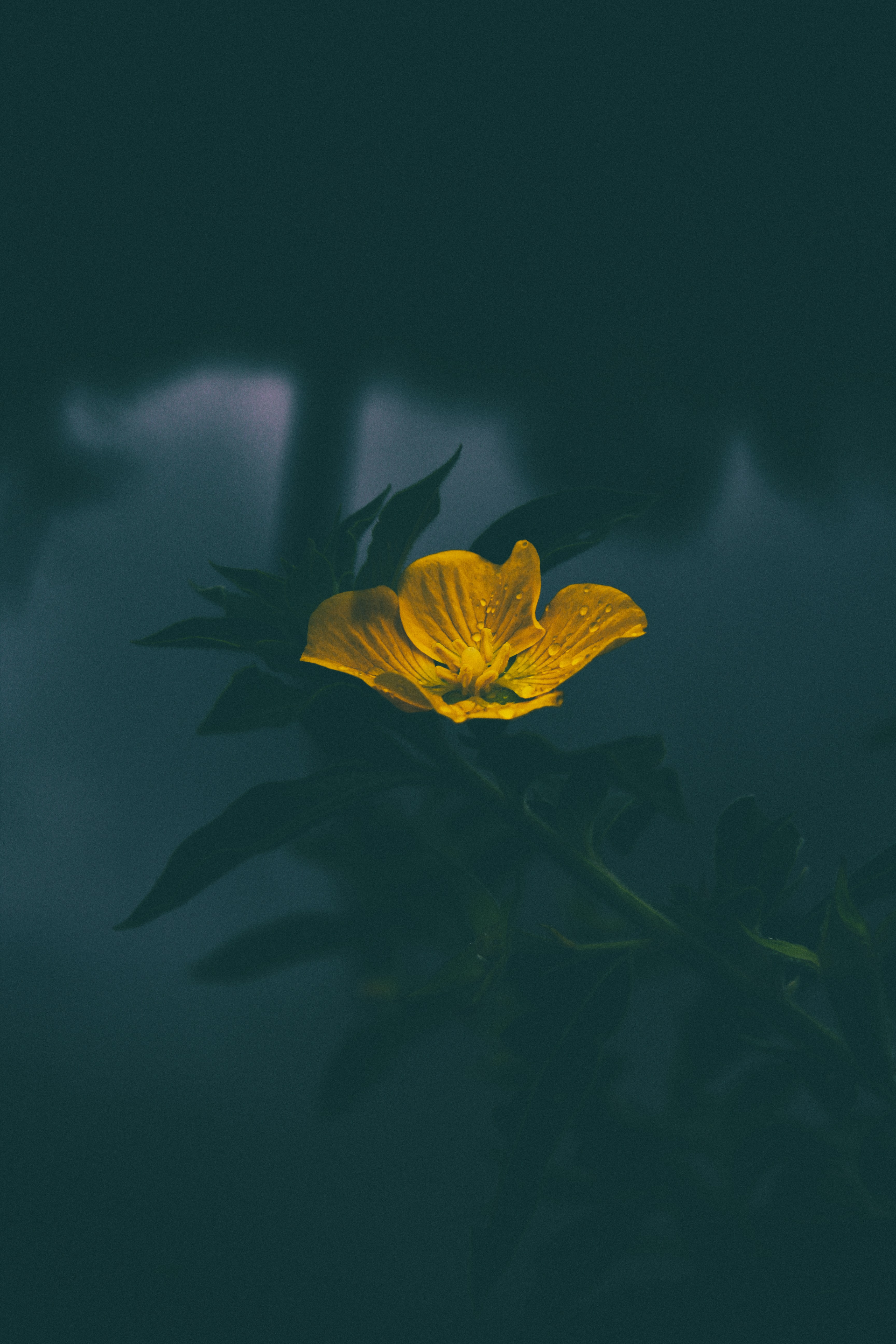 A dim shot of a single yellow flower against a dark background