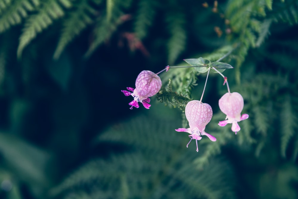 3 photo by marivi pazos marivi on unsplash a close up of a bunch of pink bell shaped flowers over fern leaves mightylinksfo