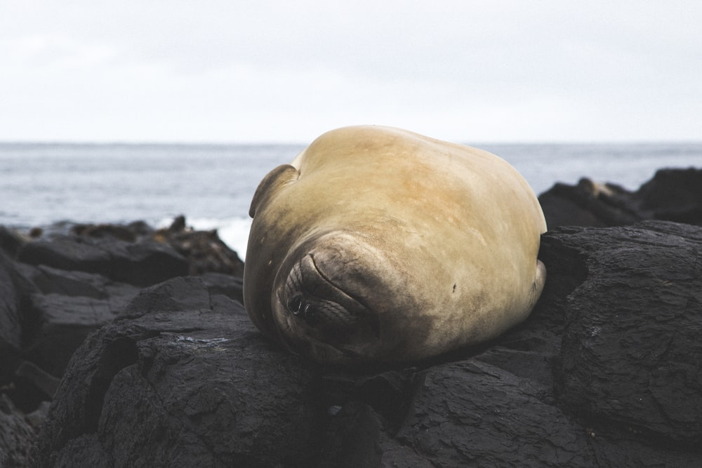 shallow focus photography of seal