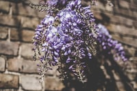 selective focus photography of purple petaled flower plant