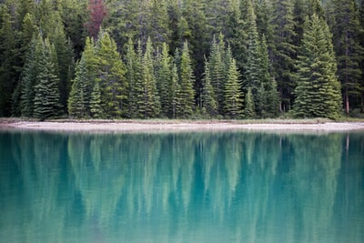 landscape photography of lake near pine trees evergreen teams background