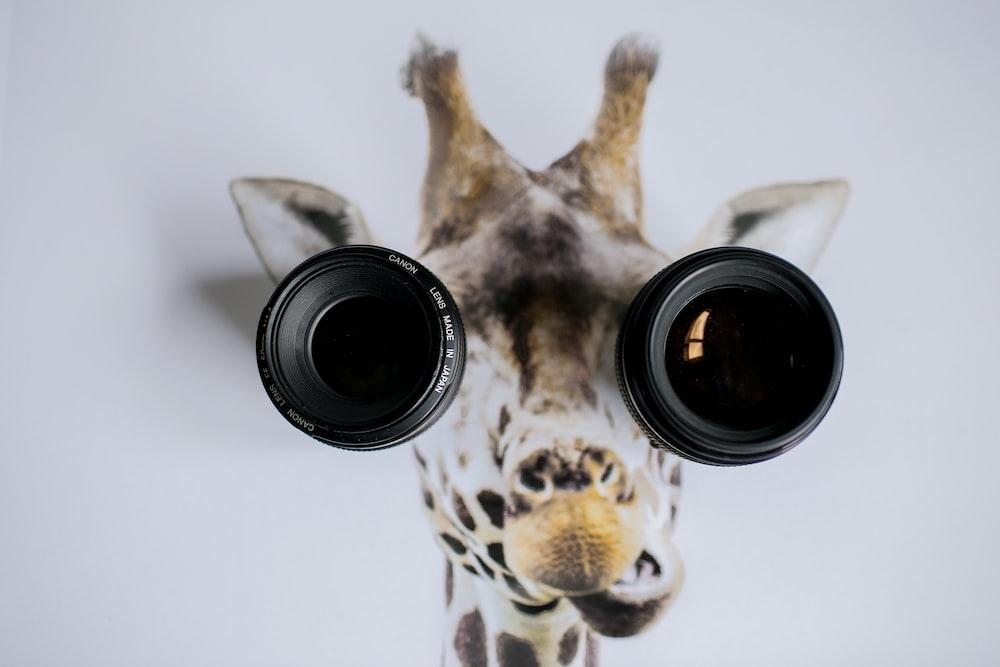 two black camera lenses on giraffe painting