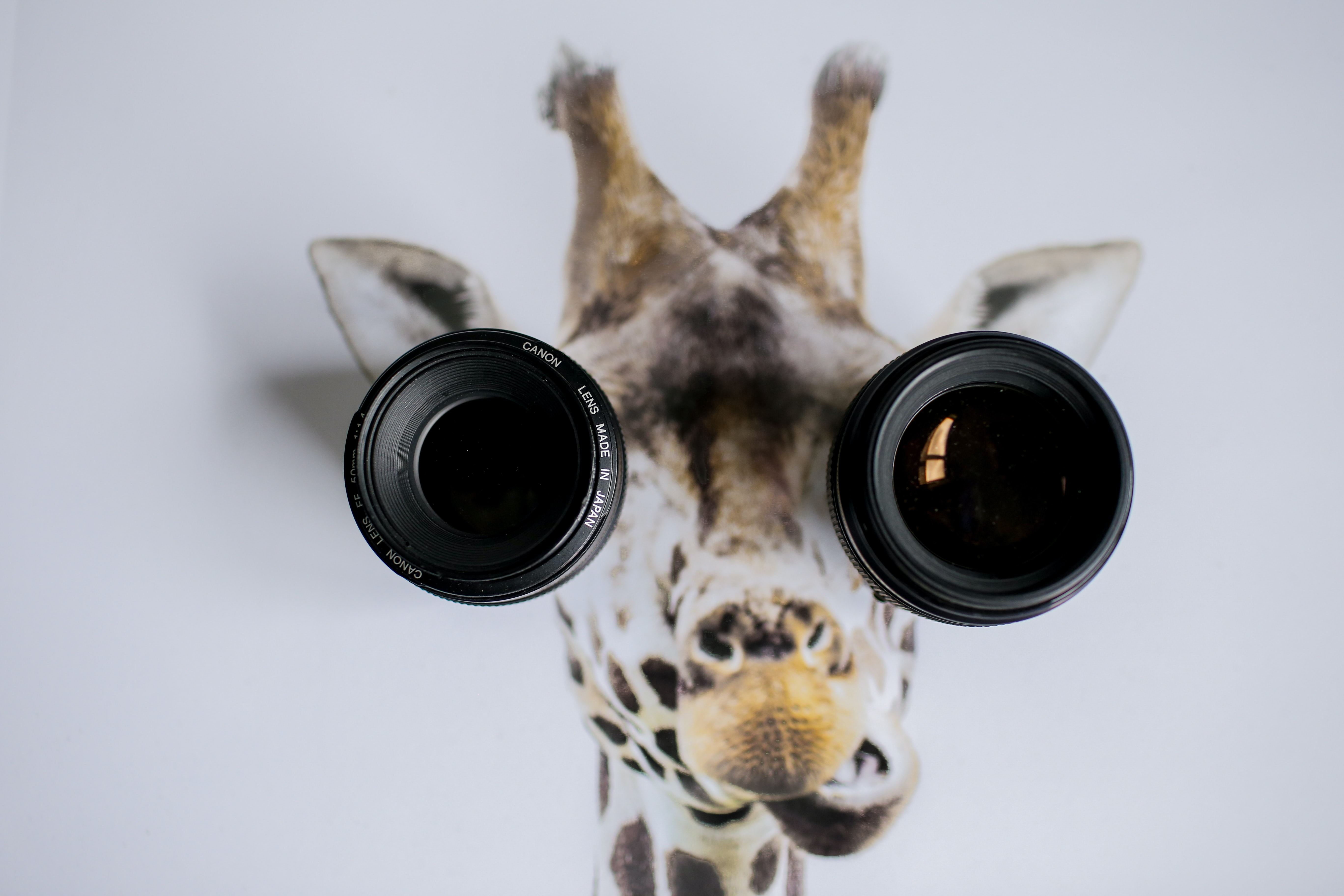 Two camera lenses on a picture of a giraffe's head