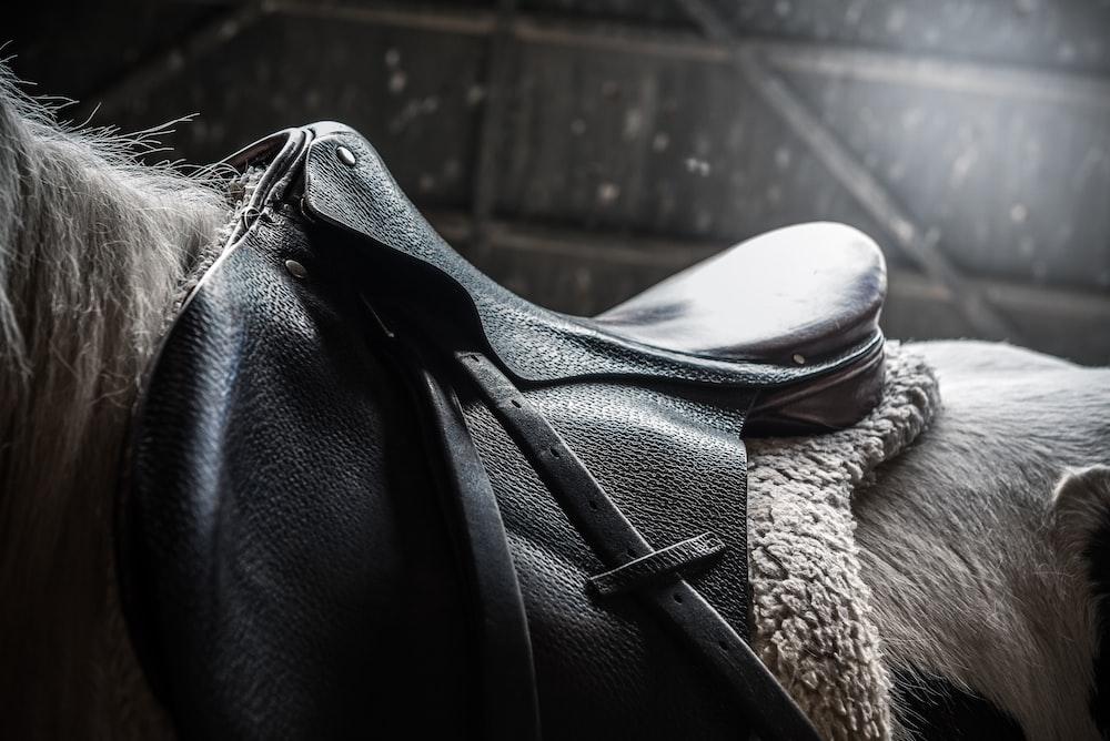 horse with black leather saddle