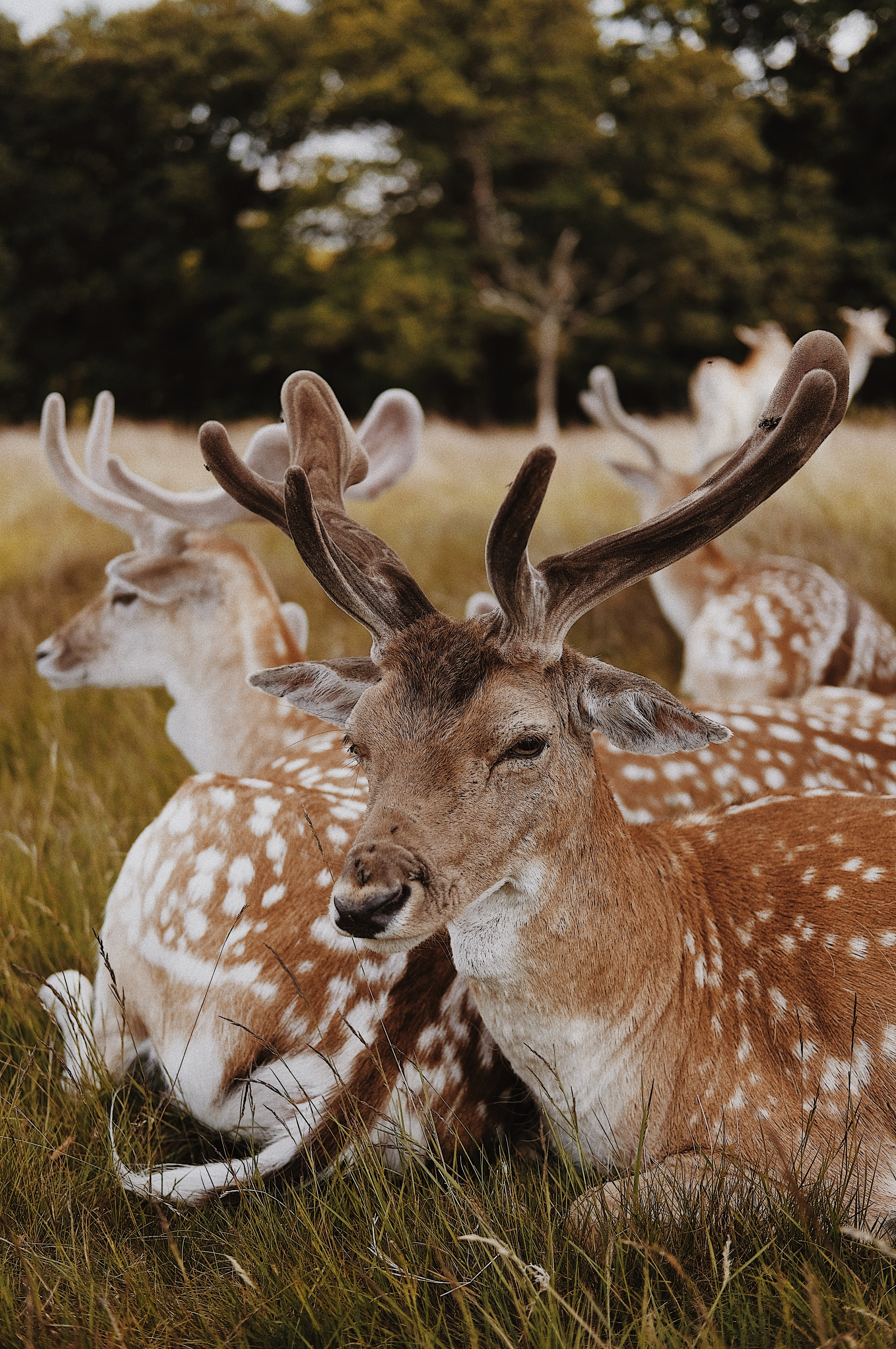 Close-up of a herd of deers sitting close to each other in grass
