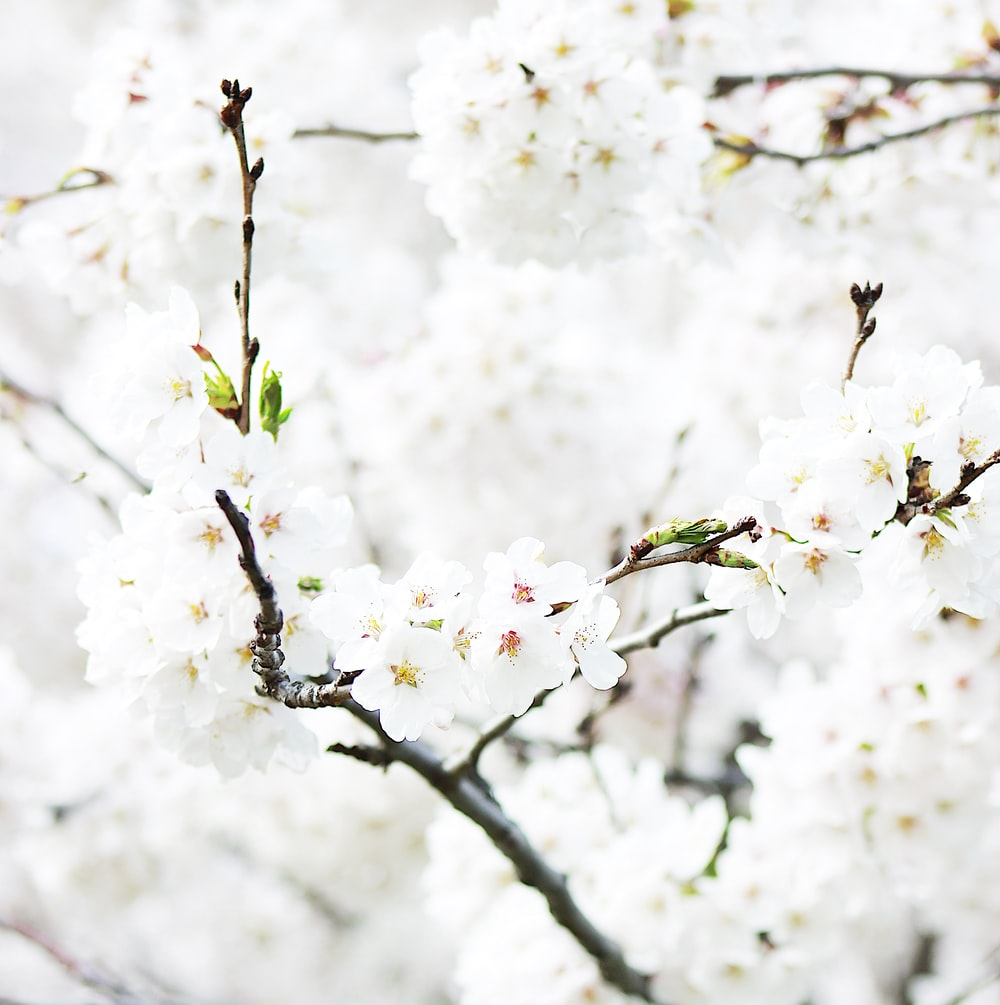 closeup photography of white flowering tree