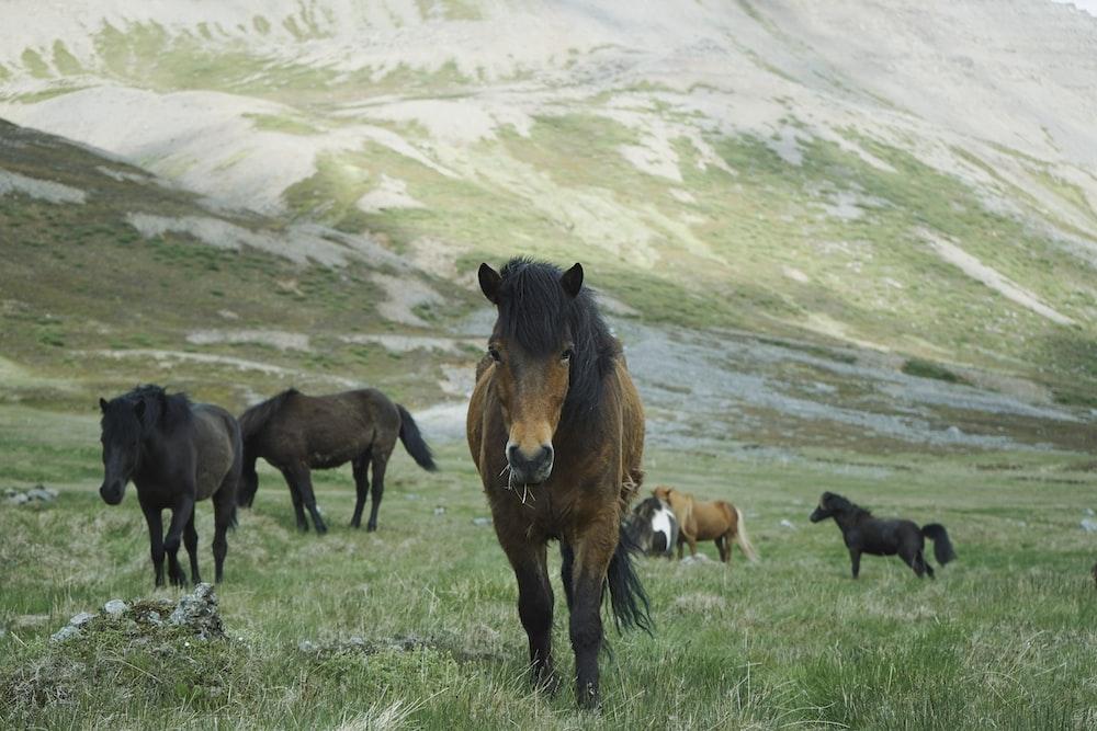 herd of horses on mountain