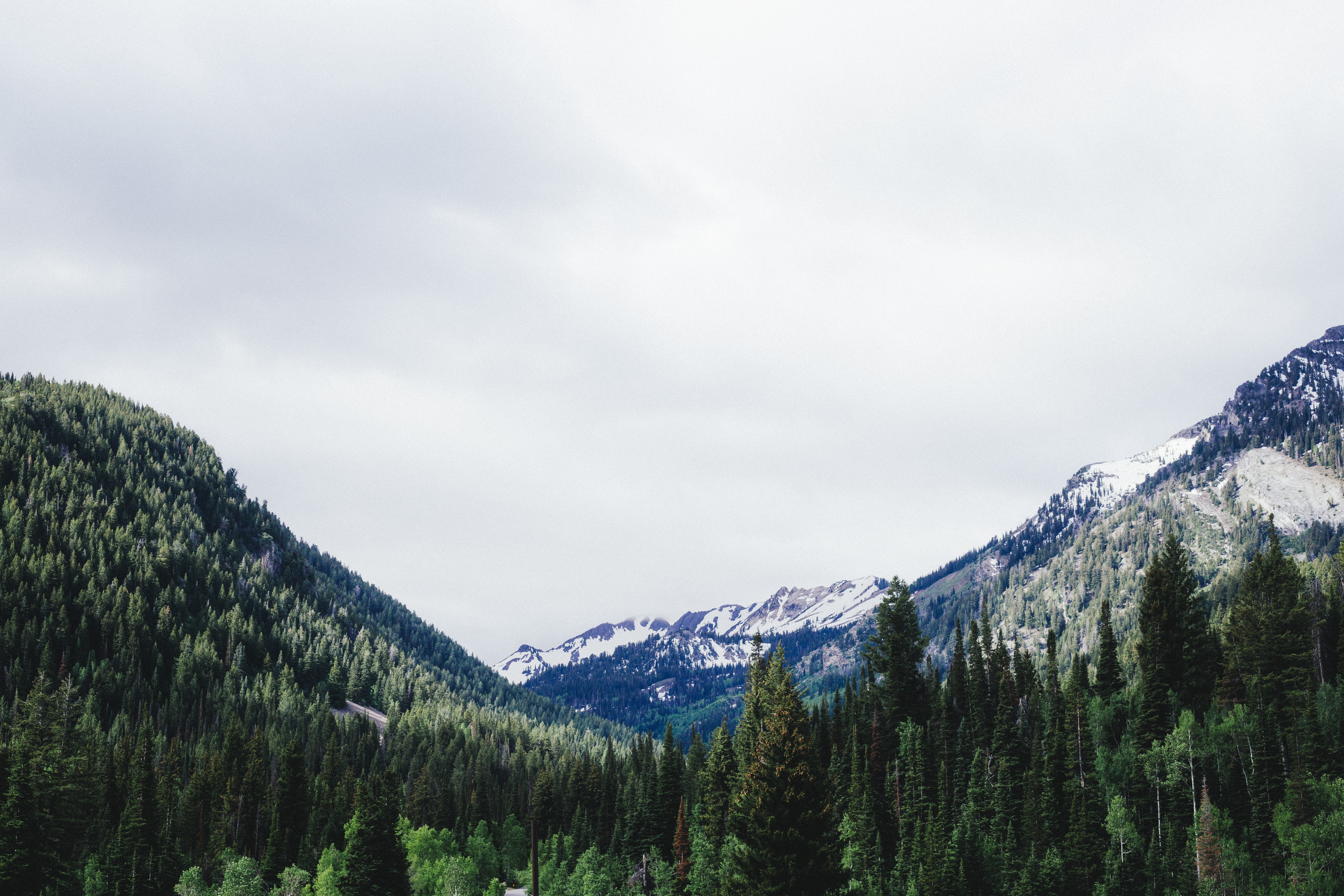 A wooded mountain pass with snowy mountaintops at the back in Big Cottonwood Canyon