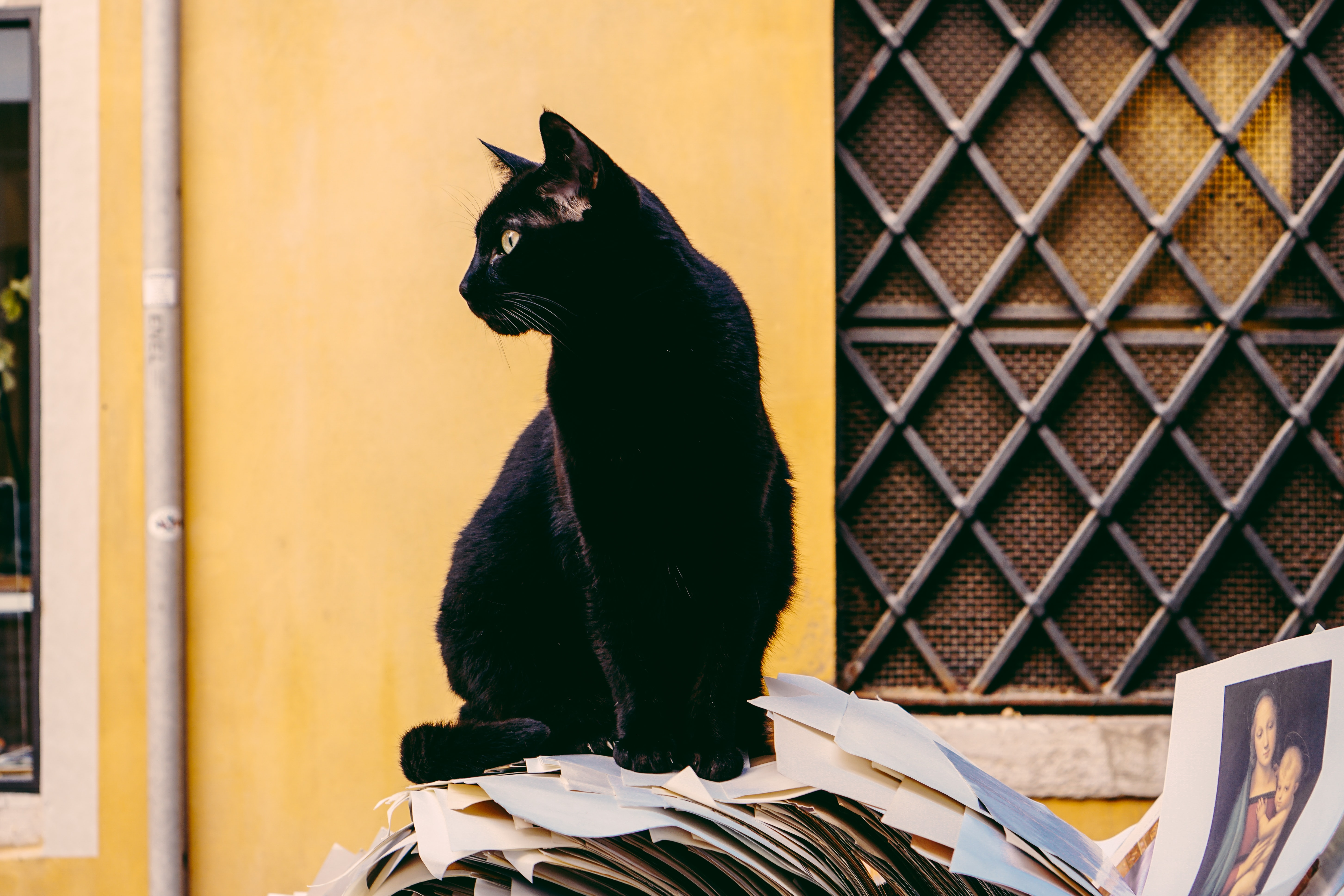 Black cat sitting in front of yellow house walk on discarded papers in Venice
