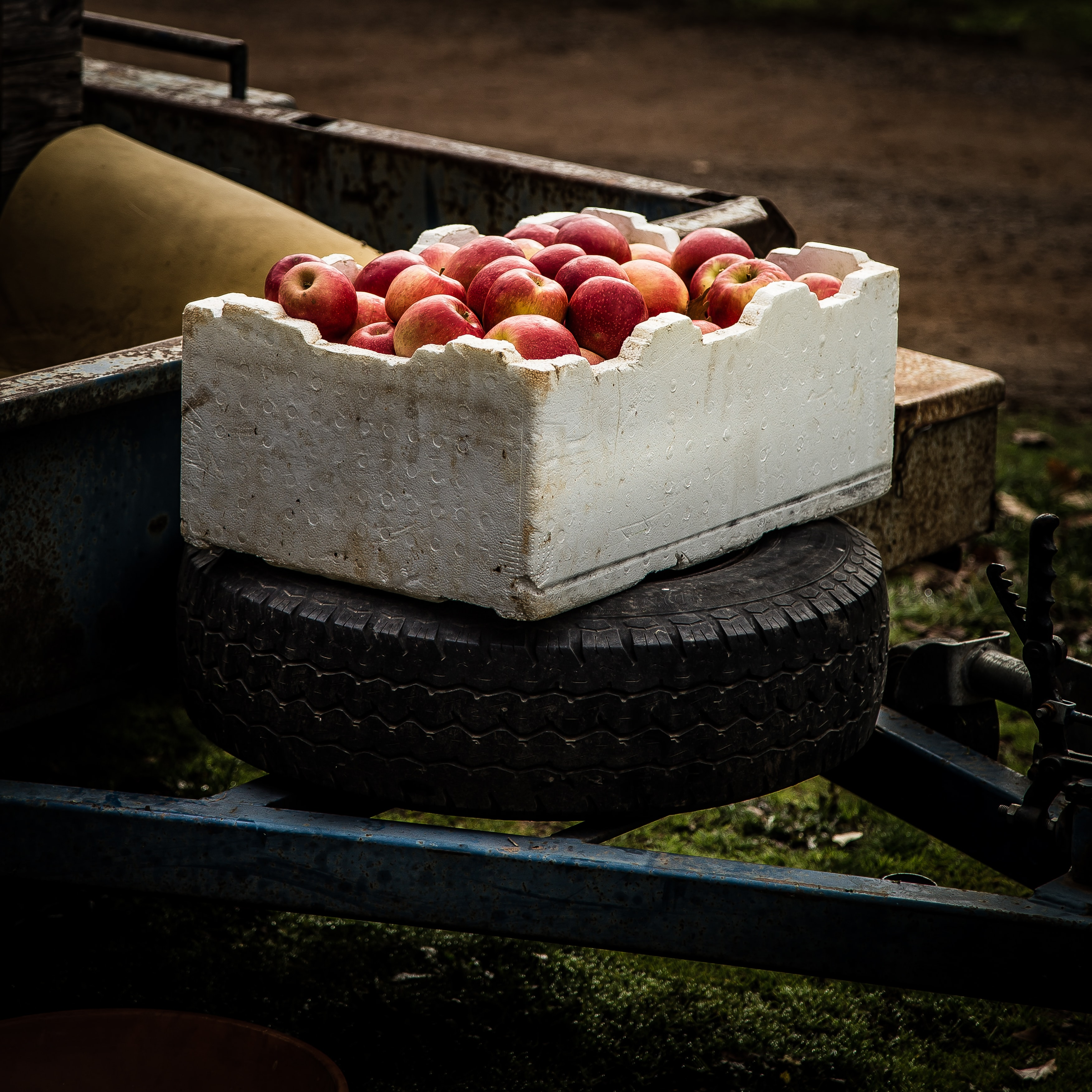 A box full of red apples in Daylesford, sitting on a tire