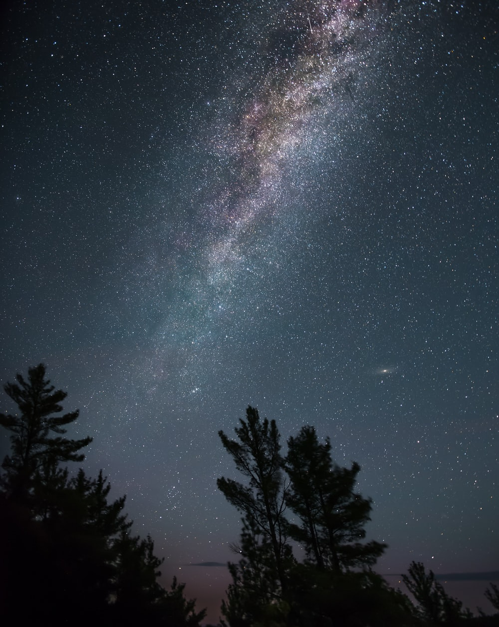 silhouette of tall trees under white star lot during night time