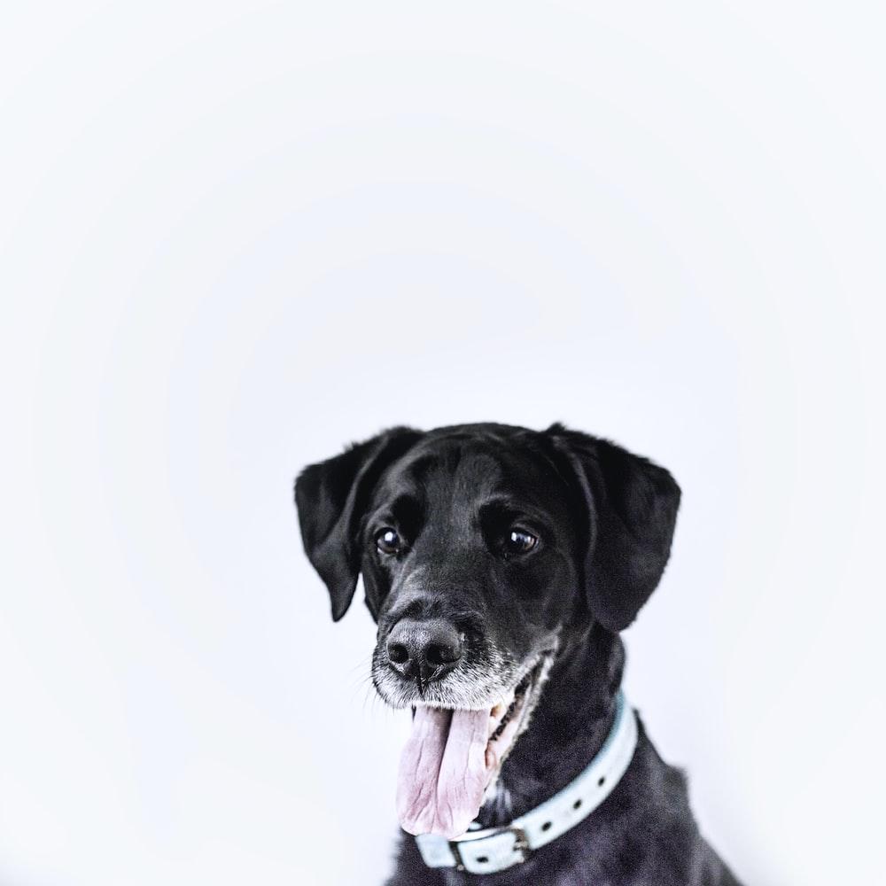 black dog wearing teal collar