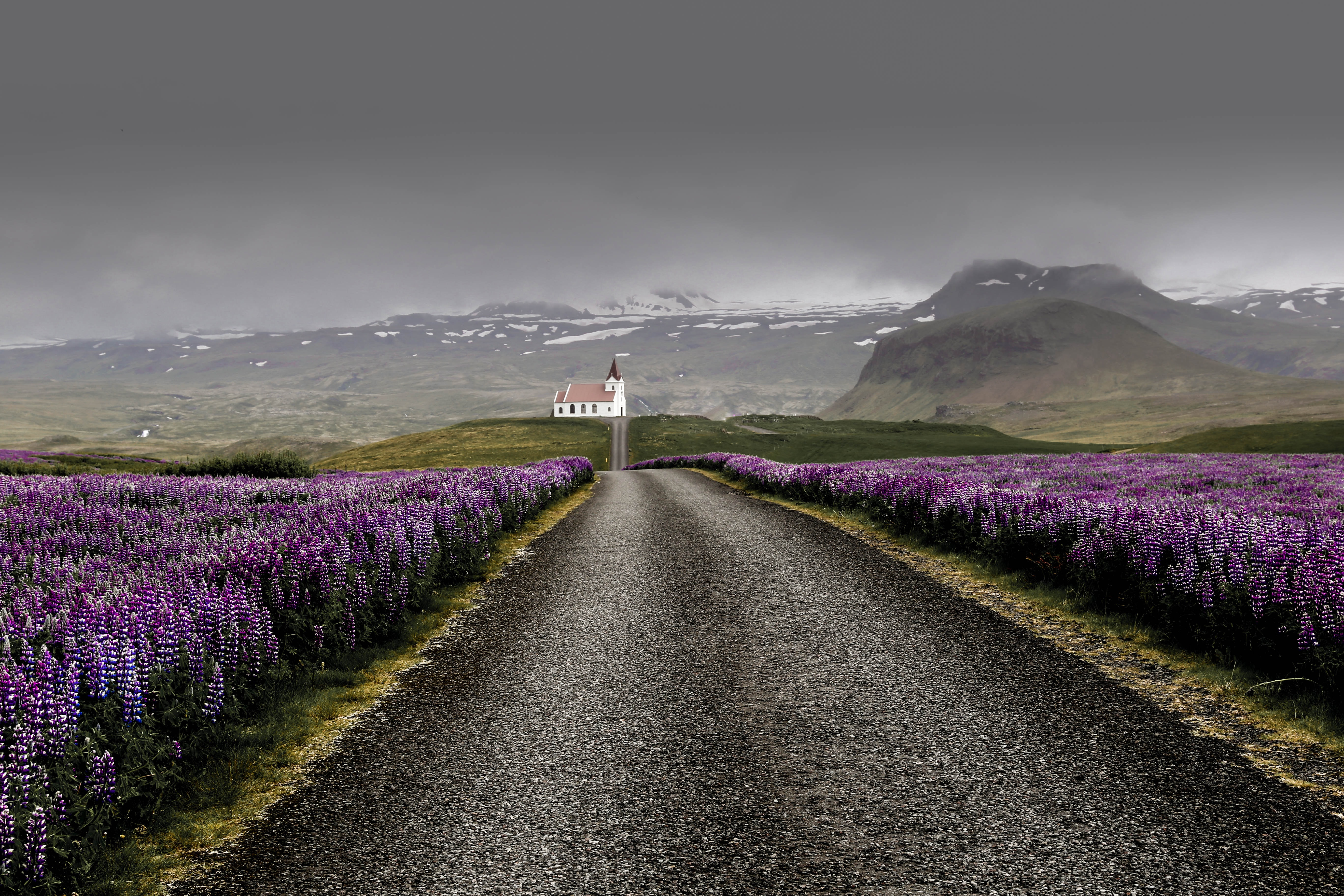 An asphalt road between fields of lupine in the mountains on a cloudy day