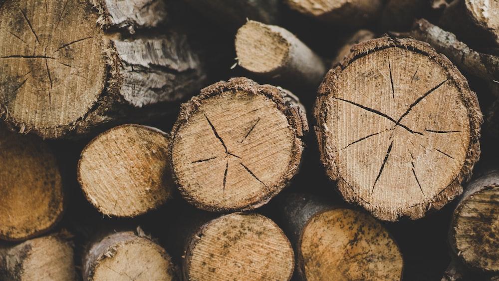 closeup photo of wood logs