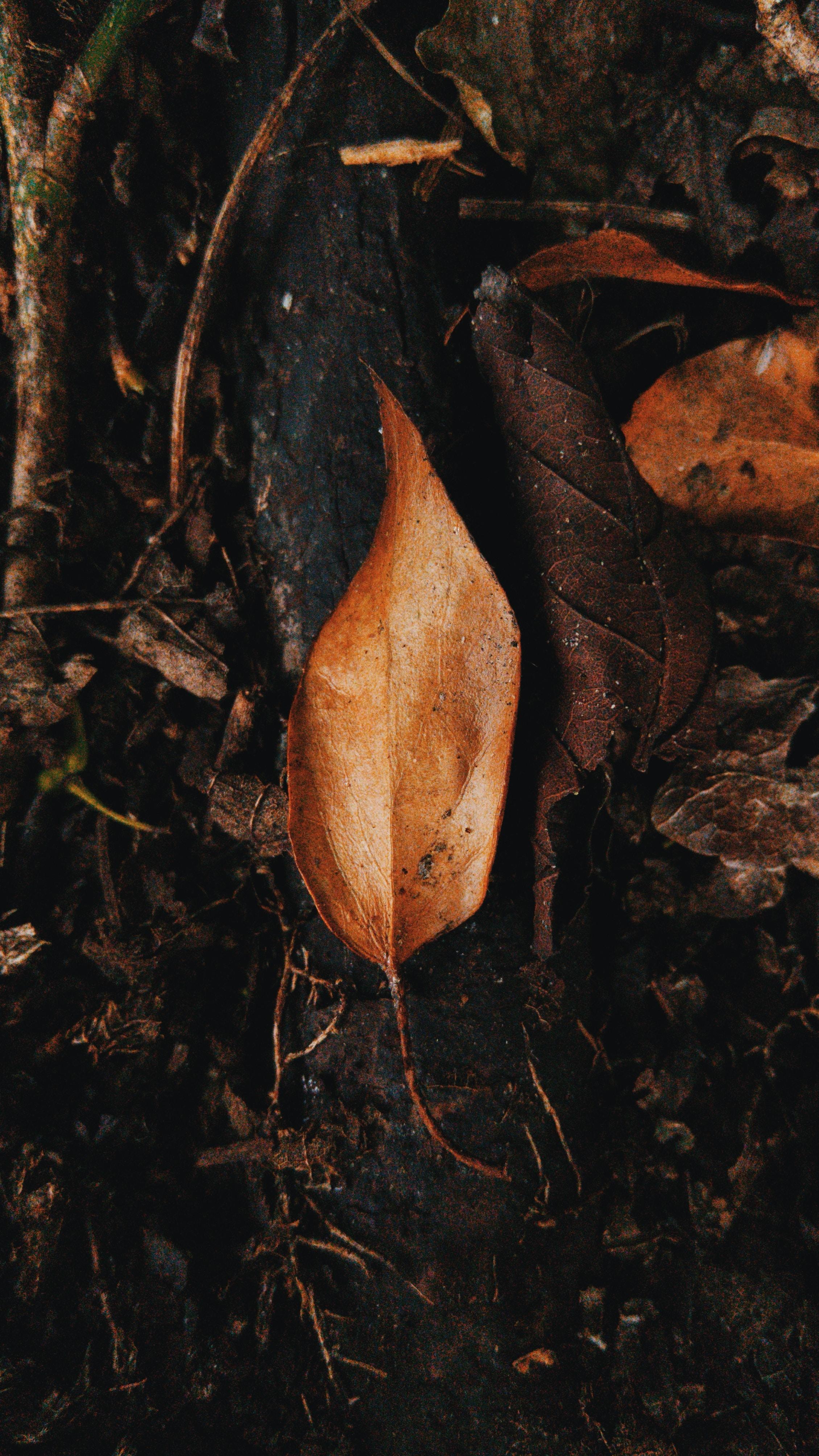 An orange leaf on the ground.