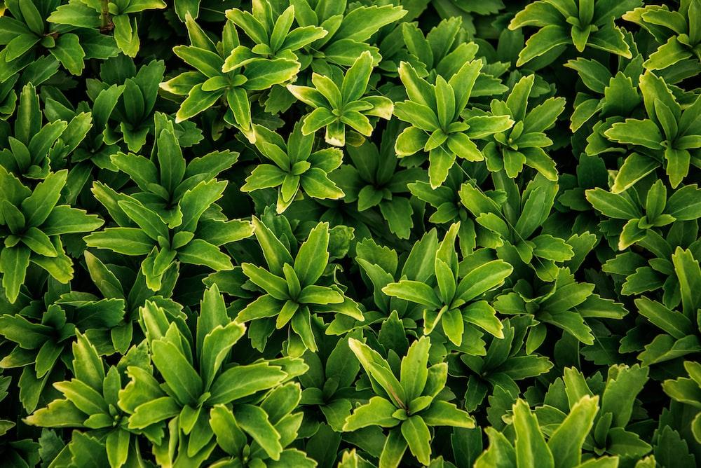 Herbal Tea Infusers Is Good For Health