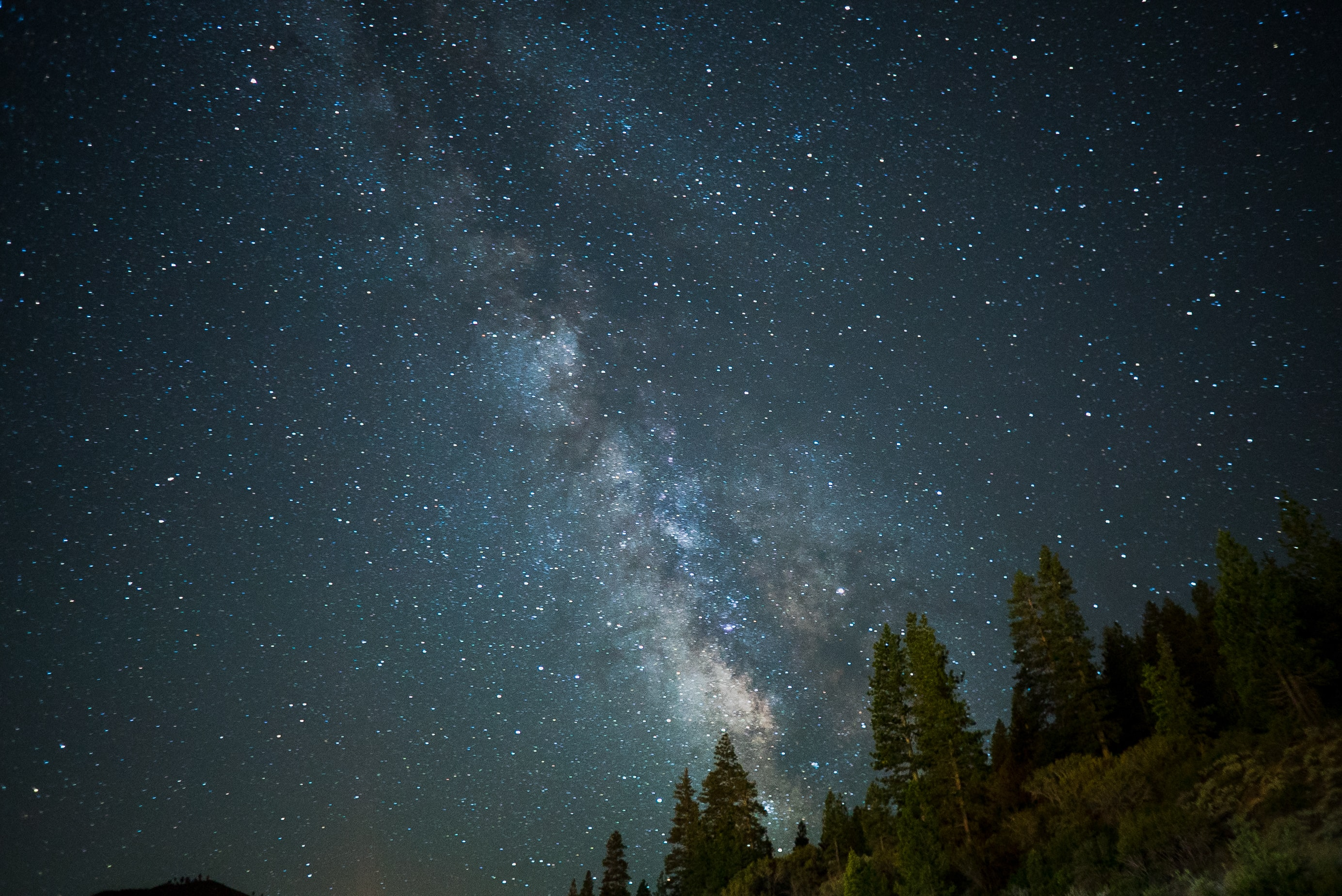 The Milky Way rises above the pine forest as seen in California.