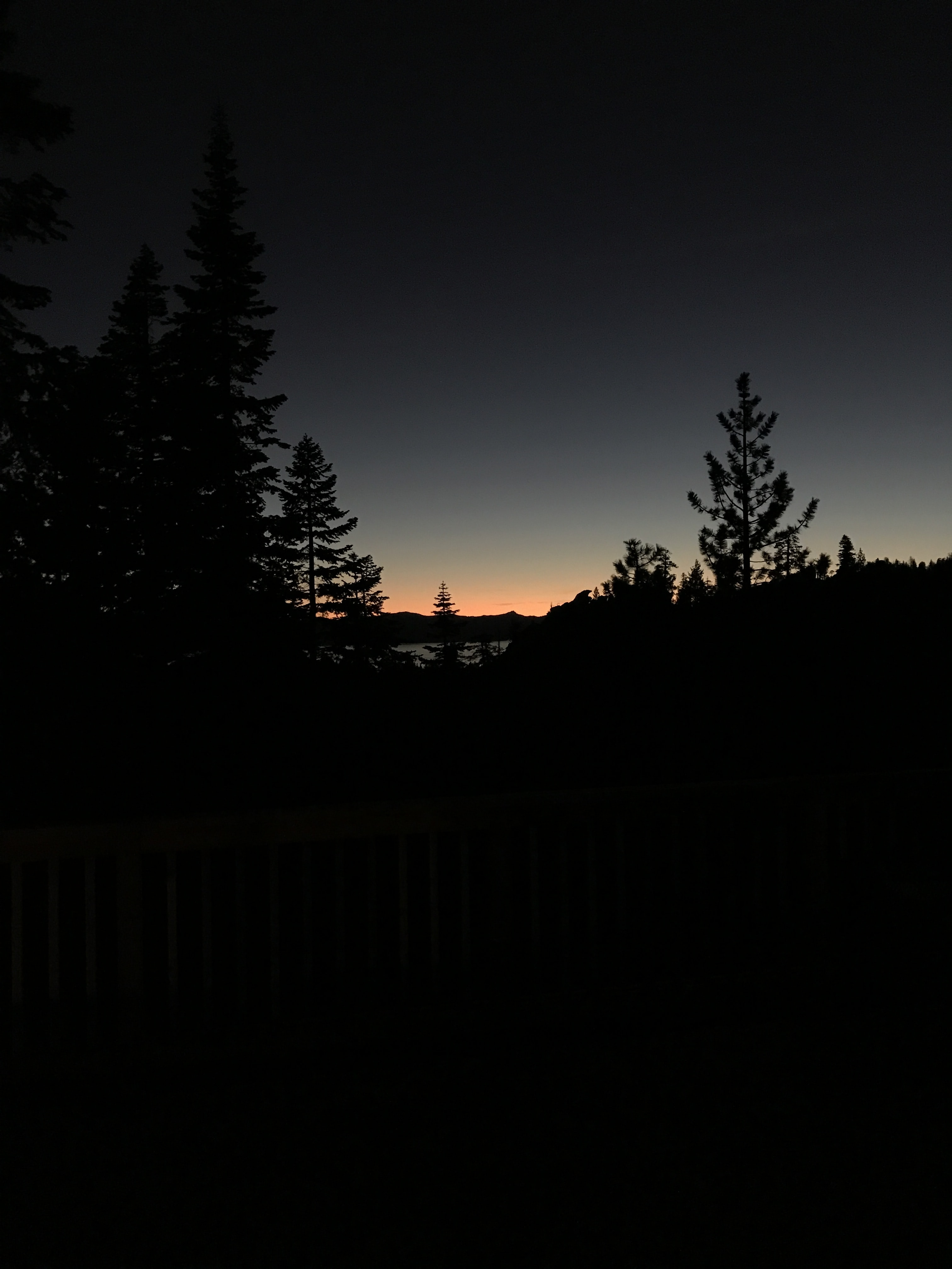 silhouette photography of pine tress