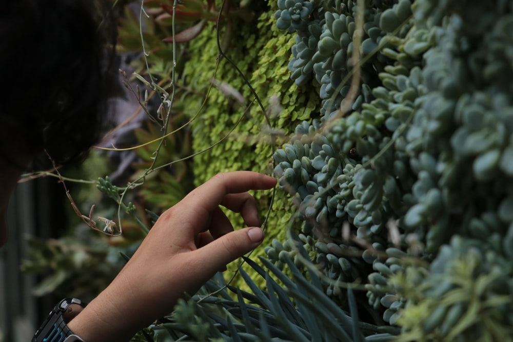 person holding green plant during daytime