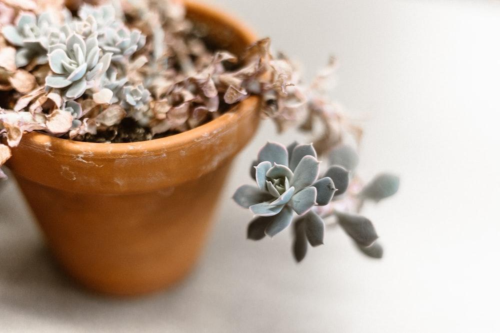 pot of succulent plant